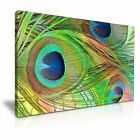 ANIMAL Peacock Canvas Framed Printed Wall Art 14 ~ More Size