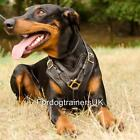 Doberman Harness from the Producer | Padded Dog Harness for Doberman Style 2015