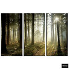 Woodland Forest   Landscapes BOX FRAMED CANVAS ART Picture HDR 280gsm