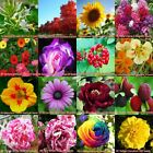 95 Various Ornamental Grow up Flower & Plants Seeds Garden Yard For View Decor