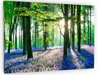 STUNNING BLUEBELL WOODS WOODLAND FOREST CANVAS WALL PICTURE 678