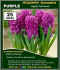 FLOWER  SEEDS -HYACINTH Orientalist*  25x PURPLE SEEDS - Highly Perfume