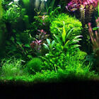 Assorted Bunched Plants x 10 (Tropical Aquarium)