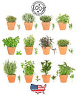 🌿 Herb Seeds - Choose your Variety - Heirloom Fresh Non GMO - Fast Ship USA 🌿
