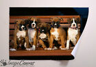 BOXER DOG PUPS GIANT WALL ART POSTER A0 A1 A2 A3