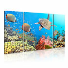 ANIMAL Sealife Canvas Framed Printed Wall Art 4 ~ 3 Panels