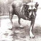 Alice in Chains by Alice in Chains (CD, Nov-1995, Sony Music Distribution (USA))
