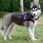 Husky Harness for Weight Pulling and Walking | Leather Dog Harness for Husky Dog