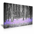 Bluebells Forest Canvas Nature Modern Wall Art Deco ~ 9 Sizes