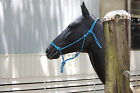 Natural Horsemanship Polyester Yacht Training Rope Halter COLORS! Fits Parelli