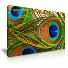 NEW ANIMAL Peacock 1 Canvas Framed Printed Wall Art ~ More Size