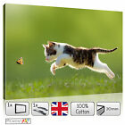 LARGE CAT BUTTERFLY GREEN GRASS NATURE STRETCHED CANVAS WALL ART PRINTS PICTURES