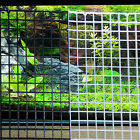 Grid Divider Tray Egg Crate Aquarium Fish Tank Bottom Isolate New