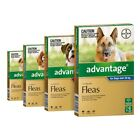 ADVANTAGE for Dogs (6-Pack)-SYD Stock