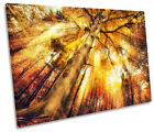 Golden Sunset Tree Tops Print CANVAS WALL ART Picture Framed
