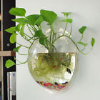 Home Living Room Decor Ball Glass Wall Hanging Flower Plant Vase Container US