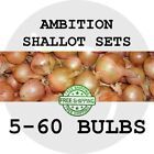 2018 SHALLOT BULB SETS - Ambition - Spring Planting! FREE SHIPPING! SEEDS!