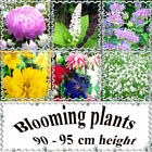 Perennial and annual blooming plants 90 - 95 cm or 32