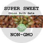 SUPER SWEET ONION SETS - LARGE CANDY YELLOW - Bulb Plant Fall Seed Live Seedling