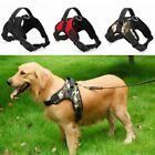 Leash Pet Dog Cat Control Harness Adjustable Walk Collar Chest Strap Multicolor