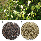 black pepper plant seeds - 200PCS White / Black Pepper Peppercorn Heirloom Seed Spice Nigrum Seeds Plant