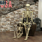 USA  Halloween Poseable Life Size Skeleton Party Prop Decor Human Anatomy Model