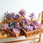 Purple Artificial Potted Mini Succulents Diy Home Wall Decor Floral Flower Plant