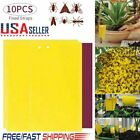 10-20pcs Sticky Fly Trap Paper Yellow Traps Fruit Flies Insect Glue Catcher Best