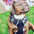 BABYLTRL Big Dog Harness No Pull Adjustable Pet Reflective Oxford Soft Vest for