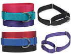 Guardian Gear Nylon Martingale Dog Collar red blue black pink violet pet collars