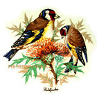 B105 - English Goldfinch birds Ceramic Decals, Goldfinches 4 sizes, 1 Mural size image