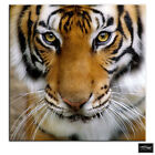 Tiger Face   Animals BOX FRAMED CANVAS ART Picture HDR 280gsm