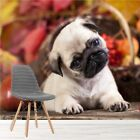 Cute Pug Puppy Dog Wall Mural Animal Photo Wallpaper Kids Bedroom Home Decor