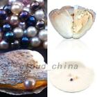 0.75-8MM Assorted 10pcs Akoya Oysters with Cultured Pearls Inside Vacuum Package