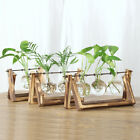 Tabletop Decorative Glass Hydroponic Vase Flower Plant Pot with Wooden Tray