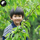 Buy Peach Fruit Tree Seeds 20pcs Plant Peaches Tree For Chinese Fruit Tao