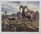 """Sierra Nevada Bighorn by Bo Newell 20x24"""" Limited Edition Signed Print"""