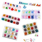 3D Decorated Real Dry Dried Flower for UV Gel Acrylic Nail DIY Art Tips Beauty w