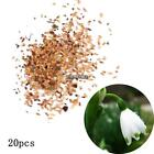 New Adorable Flower Fragrant Seeds Blooms Lily of the Valley Seeds MY8L