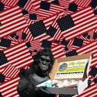 RED, WHITE, BLUE FLAGS USA DIP APE HYDROGRAPHIC WATER TRANSFER DIPPING DIP KIT