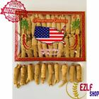 4-16oz Real Hand Selected American Wisconsin Ginseng Root Short Head Grade A+ 泡参 $15.99 USD on eBay