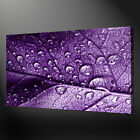 LEAF WATER DROPS MODERN CANVAS PRINT ART MANY COLOURS READY TO HANG