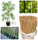 6FT Heavy Duty Strong Bamboo Canes Thick Quality Stick Garden Plant Support Pole