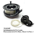 Half Price - CLEAR INTERMEDIATE Fly Line PRE-LOADED on Large Arbour Fly Reel