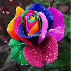 1/5/10 x 500pc Graines de rose fleur plante jardin flower seeds multicolore