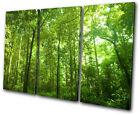 Landscapes Woodland Forest TREBLE CANVAS WALL ART Picture Print VA