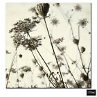 Floral Meadow Vintage Black/White BOX FRAMED CANVAS ART Picture HDR 280gsm