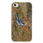 Blue Jay Protective Snap on Hard Shell iPhone 4 Case / Cover