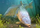 Carp Craze fishing greeting cards classic range FATHERS DAY limted edition