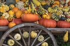 RUSTIC WAGON PUMPKINS AND GOURDS FALL PLACEMATS SETS U PICK SET SIZE